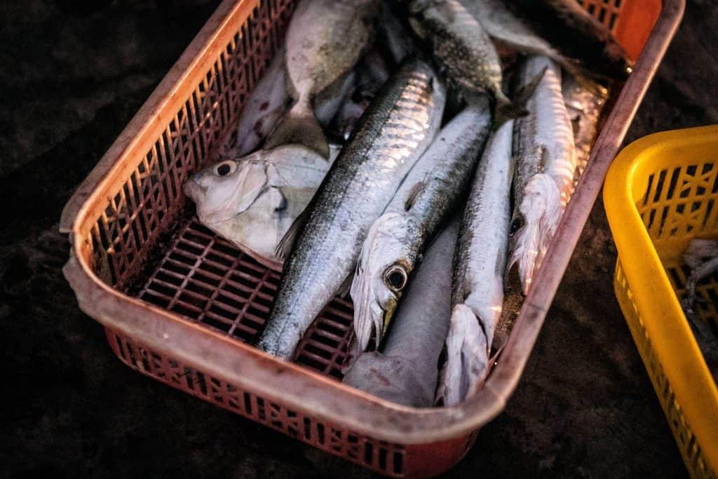 Fotografie-Reportage-Vietnam_HoiAn-Fishmarket-Marina_Schedler-Photography-007