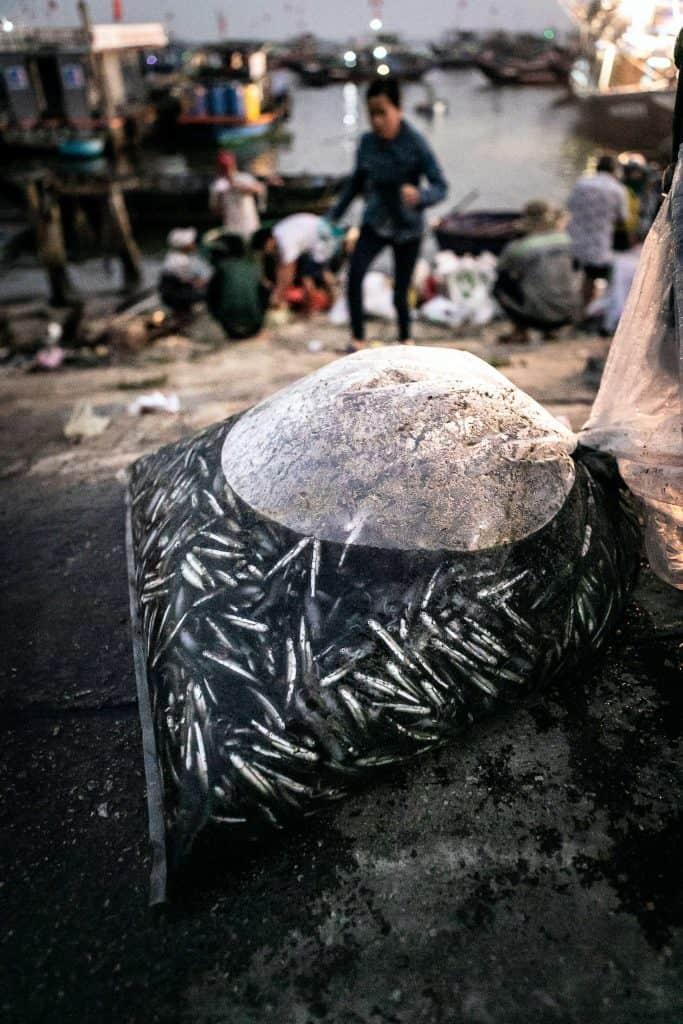 Fotografie-Reportage-Vietnam_HoiAn-Fishmarket-Marina_Schedler-Photography-009