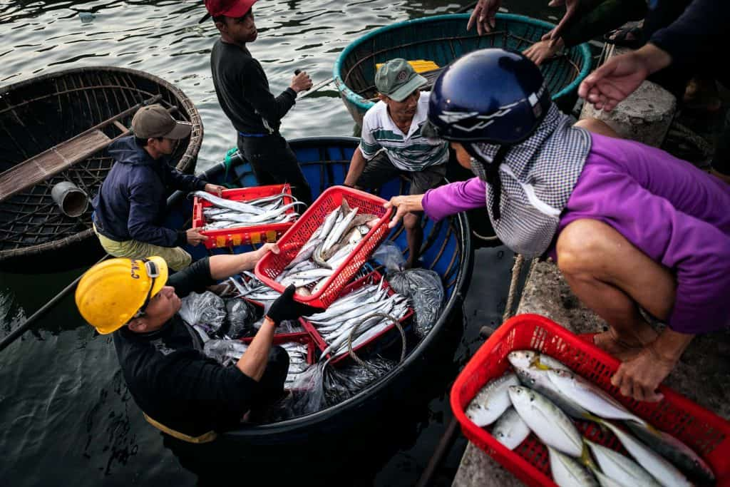 Fotografie-Reportage-Vietnam_HoiAn-Fishmarket-Marina_Schedler-Photography-013
