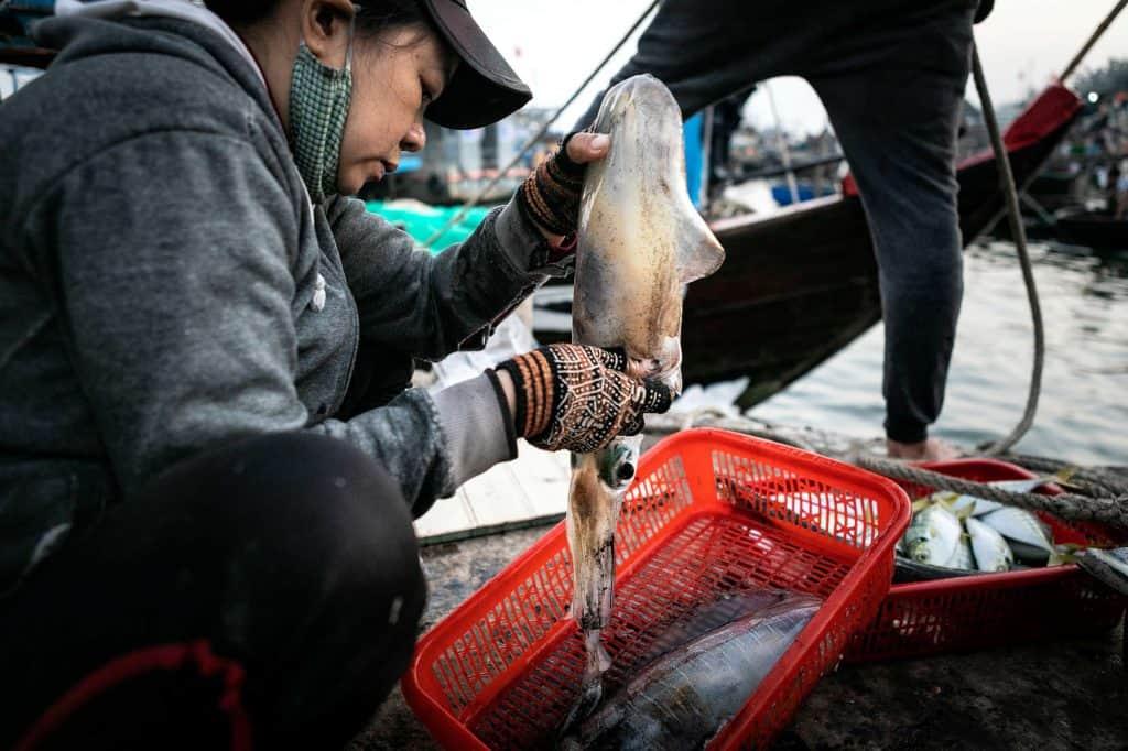 Fotografie-Reportage-Vietnam_HoiAn-Fishmarket-Marina_Schedler-Photography-016