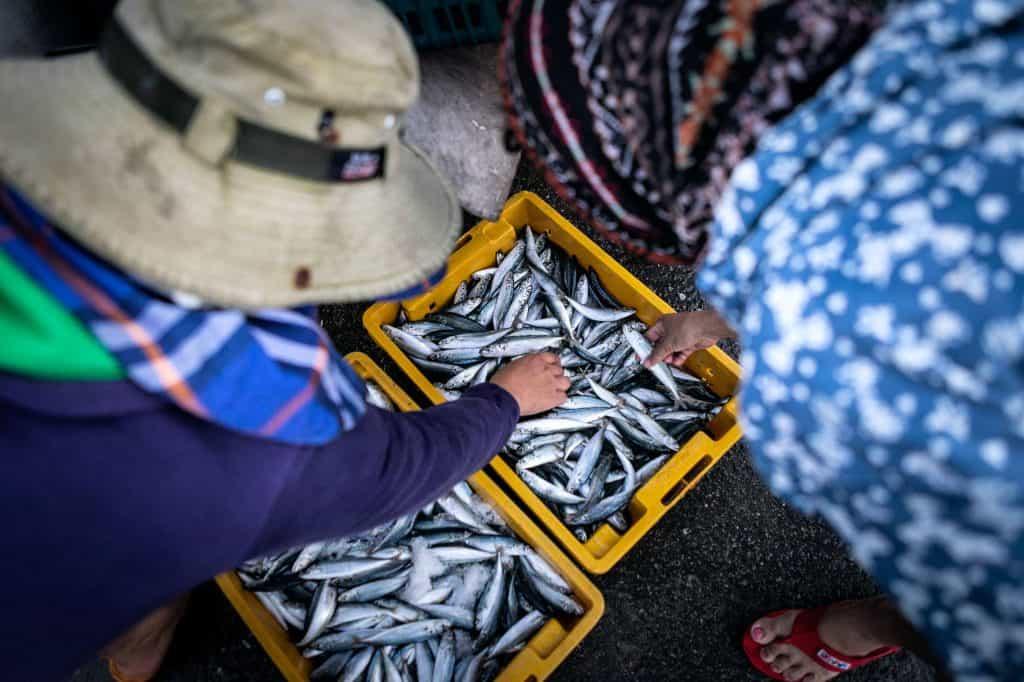 Fotografie-Reportage-Vietnam_HoiAn-Fishmarket-Marina_Schedler-Photography-021