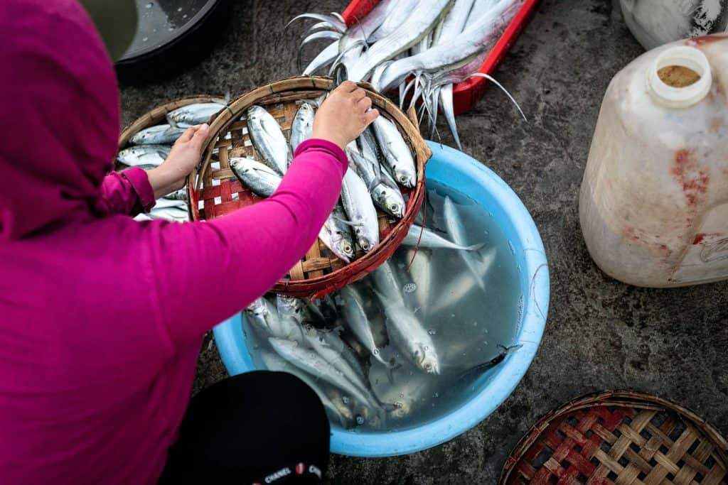 Fotografie-Reportage-Vietnam_HoiAn-Fishmarket-Marina_Schedler-Photography-025