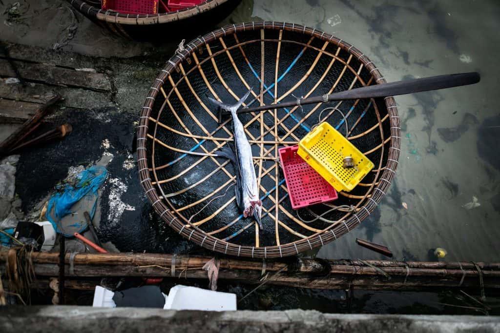 Fotografie-Reportage-Vietnam_HoiAn-Fishmarket-Marina_Schedler-Photography-026
